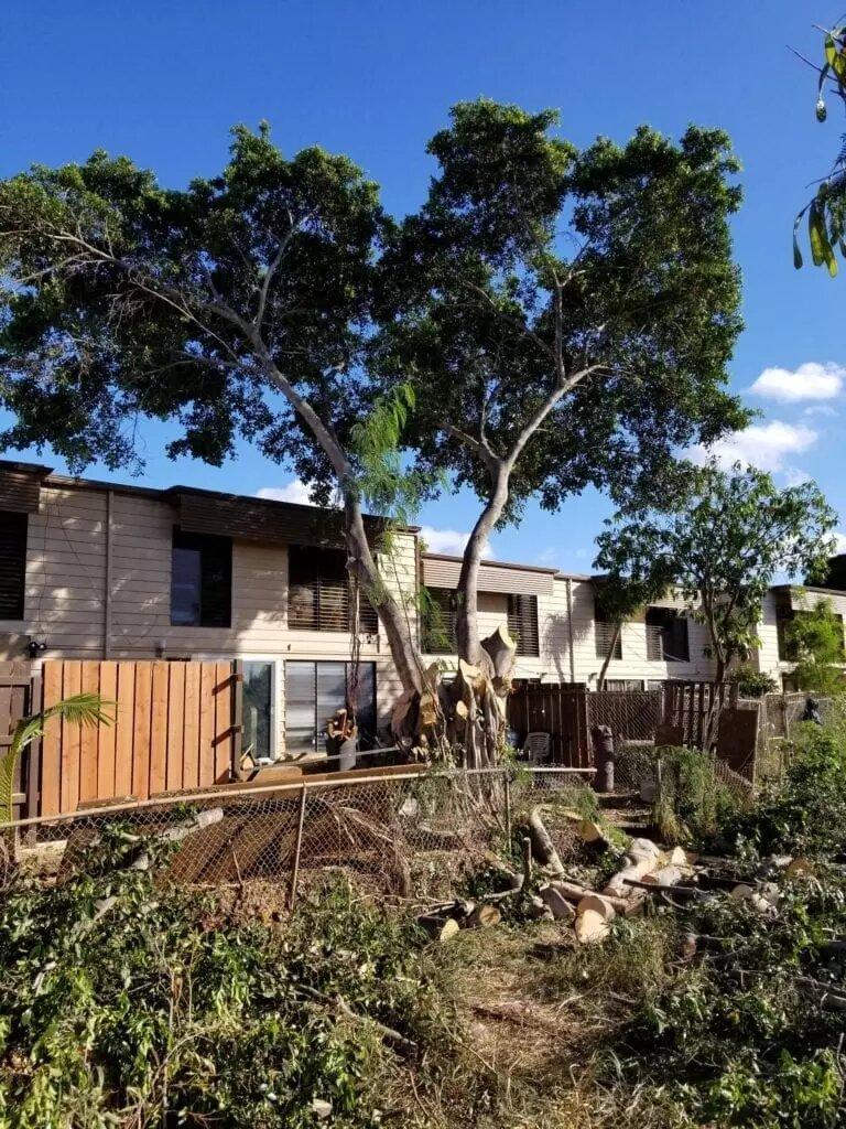Kailua Tree Trimming